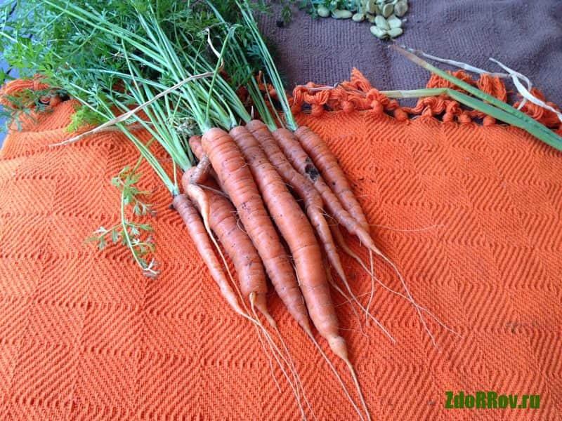 Морковь против паразитов