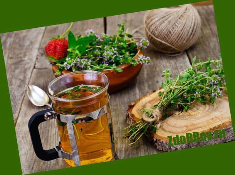 Отвар из травы сладко-горького паслена и черной бузины для лечения псориаза