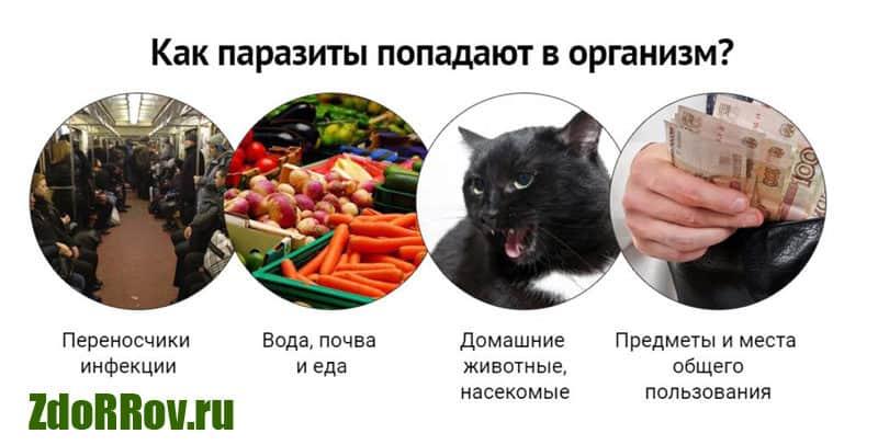 Причины появления паразитов в организме человека