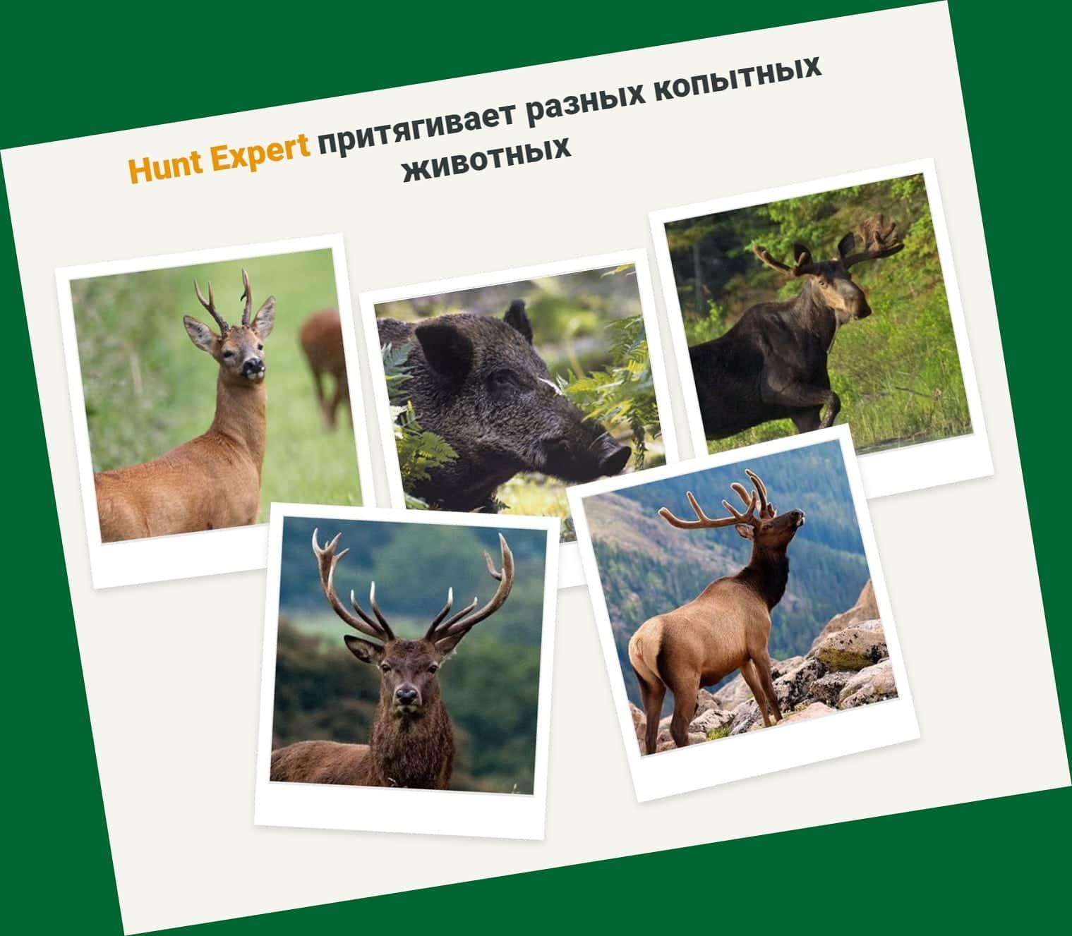 Действие Hunt Expert